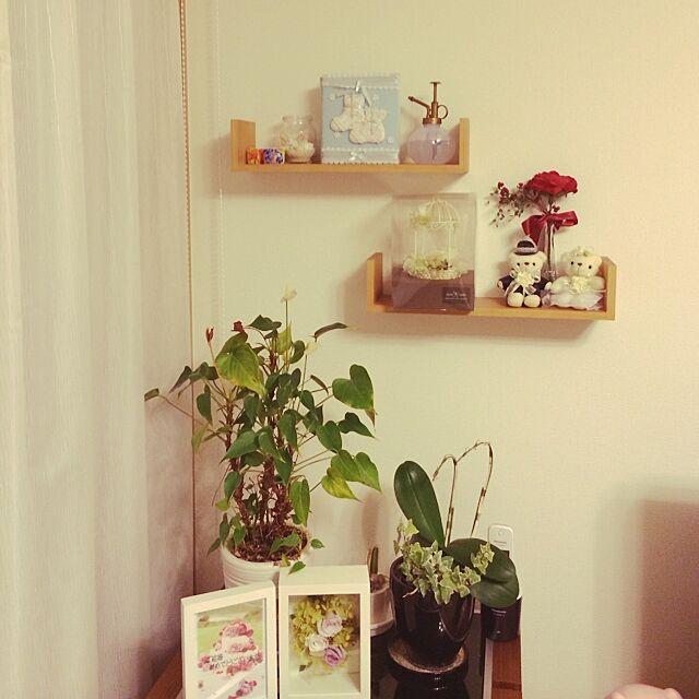 My Shelf,雑貨,DIY,観葉植物,ニトリのウォールシェルフ,手作り,100均,セリア,ニトリ makoketa.fの部屋