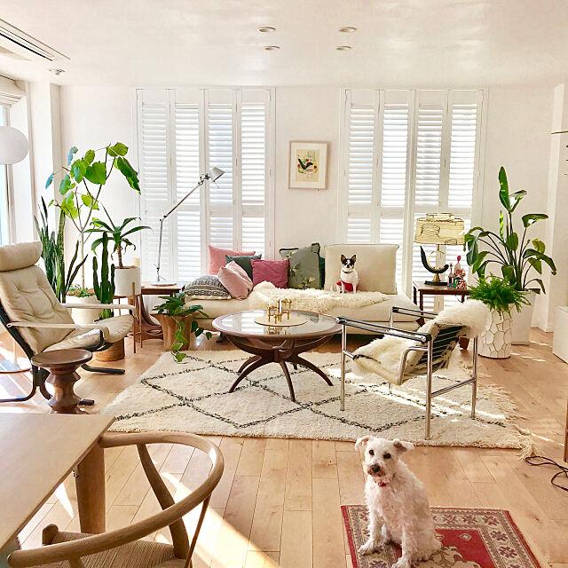 Lounge,ミックスインテリア,海外インテリア好き,ヴィンテージ家具,アートのある暮らし,北欧,いぬと暮らす,植物のある暮らし,ミッドセンチュリー家具,観葉植物,ミッドセンチュリー,ホワイトインテリア,北欧スタイル,北欧インテリア Sacco38の部屋