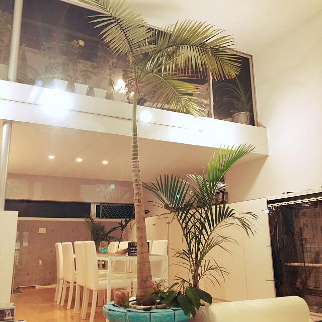 Lounge,映画のインテリアに憧れる,いいね&フォローありがとうございます☆,リゾートホテル,ペットと暮らす家,観葉植物,モダン,ペットと暮らすインテリア,ホワイトインテリア,ペット,観葉植物のある部屋,ビーチハウス,リゾート,植物,グリーンのある暮らし,カフェ風インテリア,ハワイ,テラス,アウトドアインテリア,ホテルライク,南国,インコ,インコと暮らす家,開放感,サンルーム DAICHIの部屋