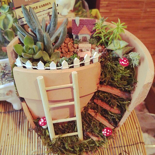 Entrance,多肉植物寄せ植え,ミニチュア雑貨,日本家屋,ミニチュアガーデン,箱庭風,フェアリーガーデン,観葉植物,多肉植物はまってます,多肉植物,セリア,和風,ミニ盆栽 jjsueの部屋