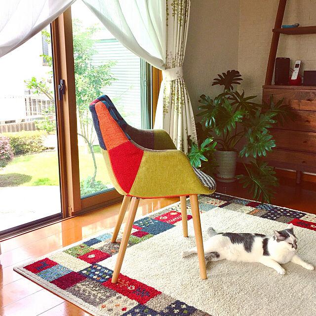 団らんスペース,ねこと暮らす,Overview,ニトリのラグ Atsukoの部屋