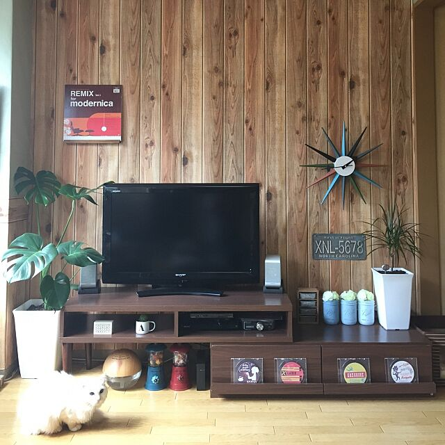 Lounge,似たような写真ですみません,テレビ周り,テレビボード,テレビ台,テレビ,サンバーストクロック,ジョージネルソン,ナンバープレート,レコード,モンステラ,白猫,ねこ,猫,ネコ,観葉植物,壁紙屋本舗,ミッドセンチュリー,賃貸,ジョージ・ネルソン hanyaoの部屋