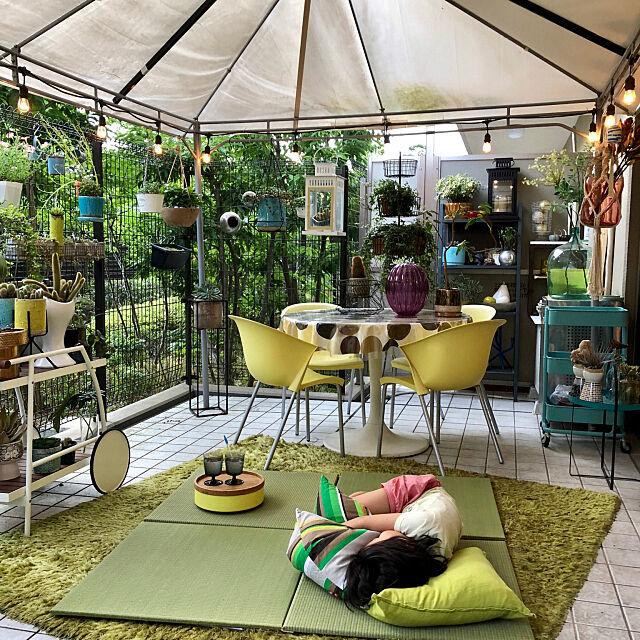 家族で暮らす,植物のある生活,モニター当選,イケヒコ・コーポレーション,ヒコラー,プラード,い草,ライトグリーン色の畳,イケヒコ,置き畳プラード,ストリングライト,RoomClipドラマ化,Entrance,アウトドアリビング,ガーデン yannの部屋