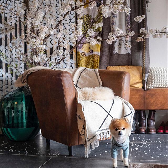 テラコッタタイル,花のある暮らし,吉野桜,階段下,ワンコと暮らす家,Lounge Masaの部屋