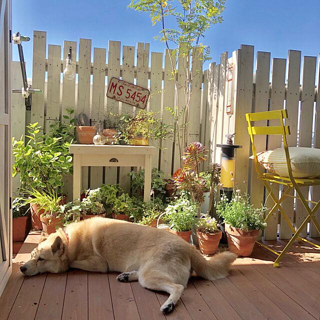 DIYミニデスク,保護犬しずく,保護犬,DIY,IKEA,ベランダガーデン,DIYウッドデッキ,DIYウッドフェンス,新VG,Bathroom leonaの部屋