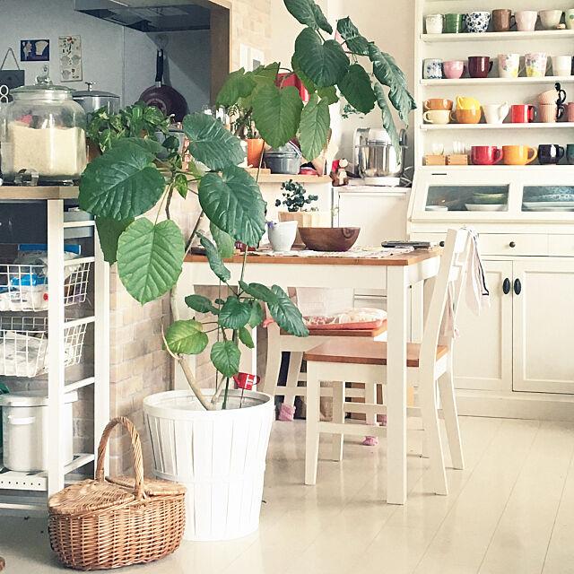 Lounge,ウンベラータ,一人暮らし,カフェ風,IKEA,植物,ペットと暮らす家,猫と暮らす。,ホワイトインテリア Yukari_buの部屋