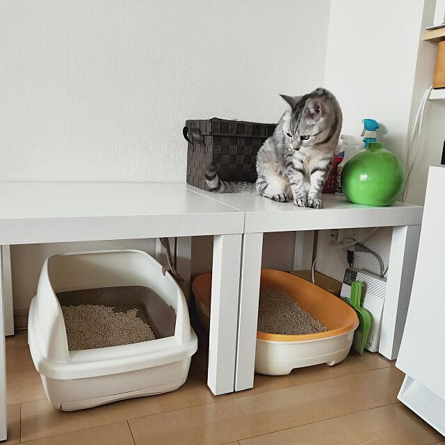 Lounge,IKEA,猫トイレ置き場,猫トイレカバー,ねこと暮らす Yumikoの部屋