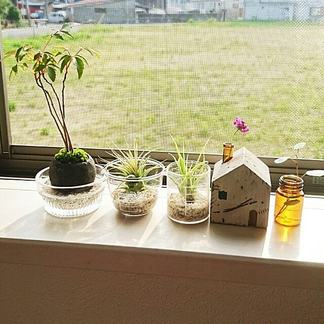 My Shelf,ダイソーエアプランツ,ダイソー,ミニ盆栽,ダイソービーカー,科学系インテリア aoiの部屋