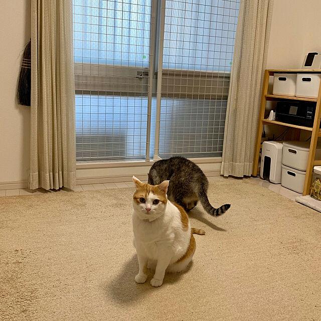 Overview,地震対策,脱走防止ネット,猫,ねこ,ねこ部,猫と暮らす,ねこのいる日常,びっけ,しょうじ,DIY,猫部屋 bikkeの部屋