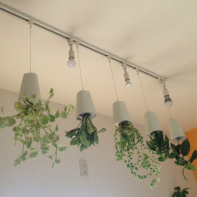 On Walls,吊るすの大好き,NO GREEN NO LIFE,緑化計画,ペペロミア,スカイプランター,プミラ,グリーン,観葉植物,コーヒーの木 maimaiの部屋