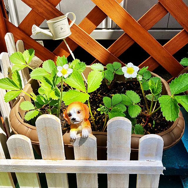 南側庭,お庭改造計画中,おうち時間を楽しむ,植物のある暮らし,RCの出会いに感謝です♡+゚*,見てくださってありがとう❁︎,いちごなってくれるかな?,柵、セリアすのこリメイク,ガーデンミニ犬、ワッツ,ピック100均,プランター、ダイソー,ラティス,いちごの花咲きました♪,去年のいちごのランナーからの苗,ガーデン雑貨,Overview CoCo0617の部屋