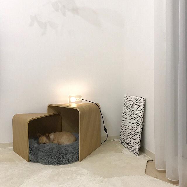 Lounge,サイドテーブル,ブロックランプ,間接照明,チワワ,犬のいる暮らし,ペット,ムートンマット,ペットと暮らすインテリア,犬,マンション,マンションインテリア,タイルカーペット haruhinaの部屋