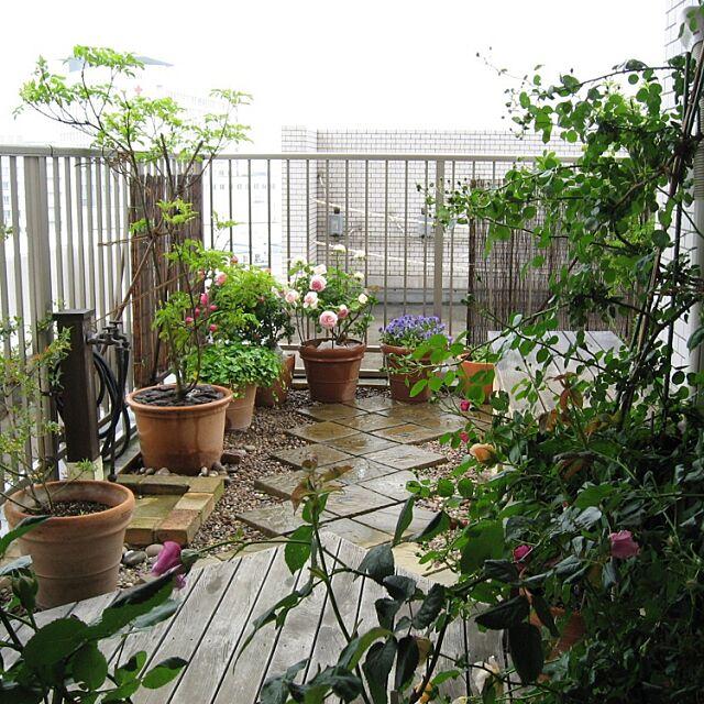 Lounge,ルーフバルコニー,ベランダガーデン,空中庭園,グリーンのある暮らし,薔薇 greenpancerの部屋
