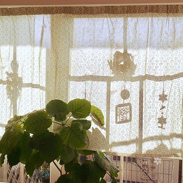 Lounge,デコ窓番外編,ウンベラータ,デコ窓,クリスマスディスプレイ,手作りカーテン,コメント喜びます♡,いいね!ありがとうございます♪,窓枠好き,フォローありがとうございます☆,緑のある暮らし godyhomeの部屋