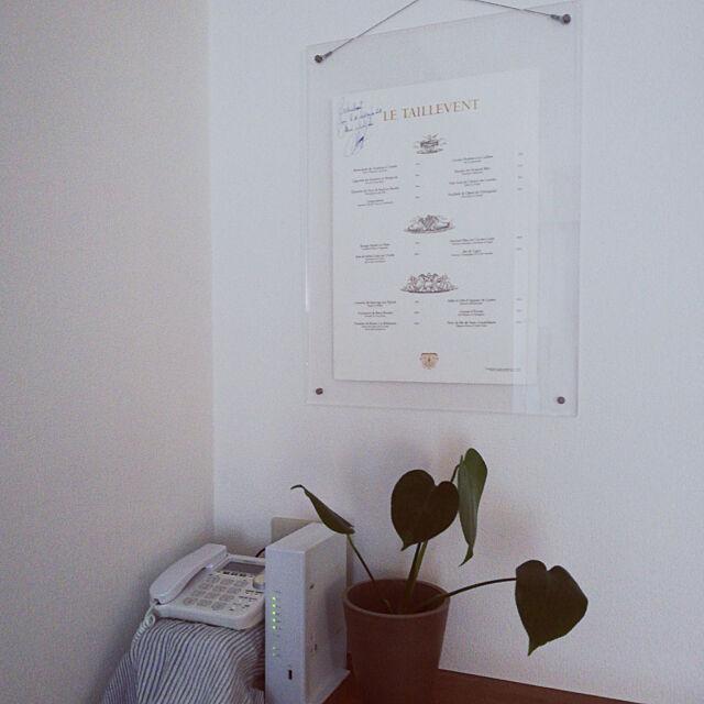 My Shelf,思い出の品,日当たり悪い,観葉植物,モンステラ,賃貸でも楽しく♪ nyanronchaの部屋