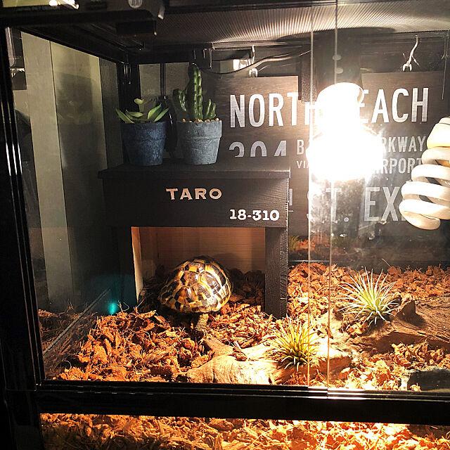 My Shelf,水槽のある暮らし,水槽ディスプレイ,ヘルマンリクガメ,シェルター,爬虫類ケージ,カメ,亀,リクガメのおうち,DIY,端材 DIY kaerucoの部屋