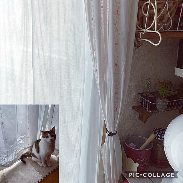 バロ,カインズ,ペットと快適に過ごせるレースカーテン,ダイソー,窓,セリア,フェイクグリーン,IKEA,猫,ダイニングキッチン,ねこと暮らす,Kitchen Lufuの部屋