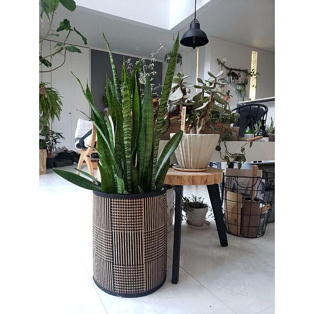 My Shelf,ig→mimt38,観葉植物,DIY,ダイソー,リメイク,ハンドメイド,鉢カバー mi-の部屋