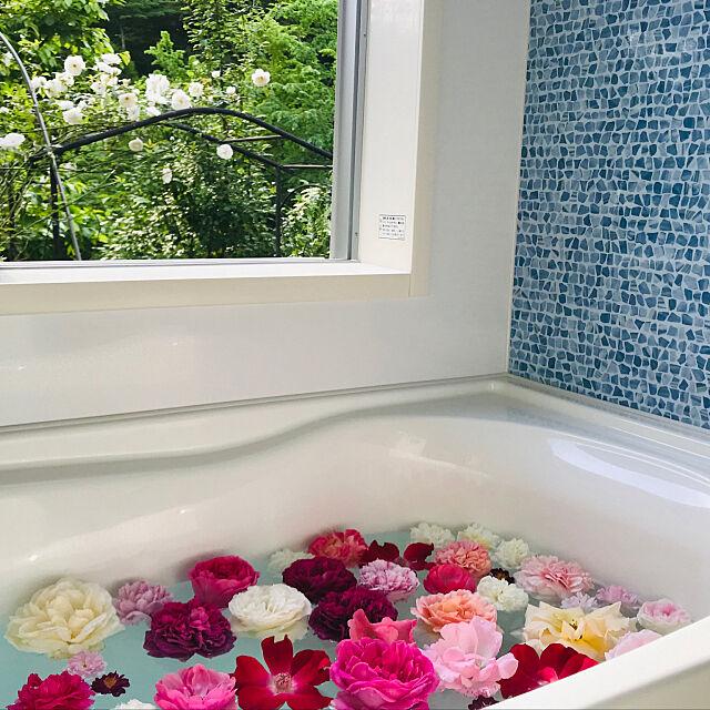 Bathroom,庭,バラ,借景,小さなお家,バラ風呂,ばらの花,バラのアーチ,自然がいっぱい,幸せ時間,バラの香り,里山,景色が大好き,バラが大好き,お家が大好き,外と繋がる家,お外が好き,(*´Д`*)ふがふが sakurasakuの部屋