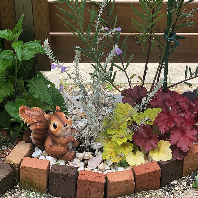 動物,アニマル,リス,グリーン,癒しの植物,プチプラインテリア,雑貨,Daiso,好きなものは飾りたいタイプ,緑のある暮らし,植物,Entrance moka-starの部屋