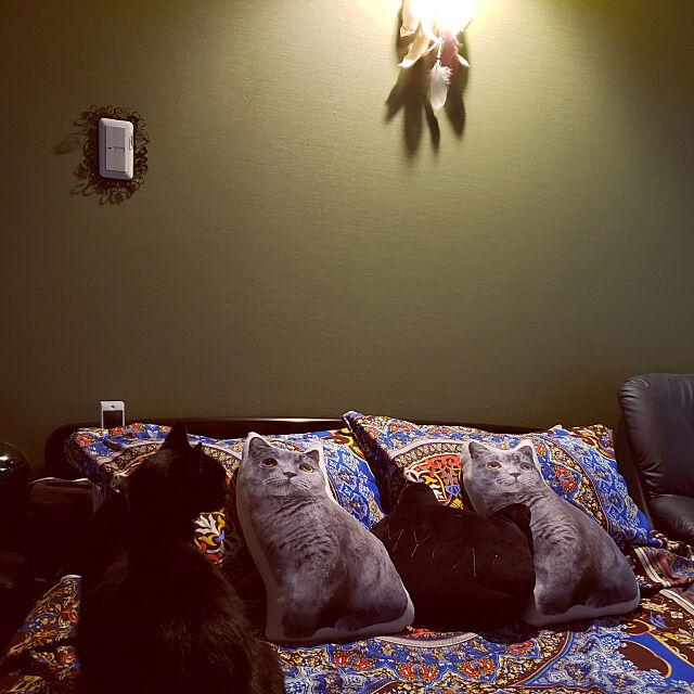 Bedroom,あの新商品買ったよ zenoの部屋