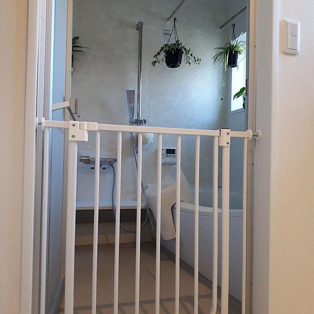 Bathroom,ペットゲート,モノ集め,いぬと暮らす,トイプードル,ベビーゲート,緑化計画,オリヅルラン,アイビー,ヘデラ,観葉植物,TOTOサザナ matthewの部屋