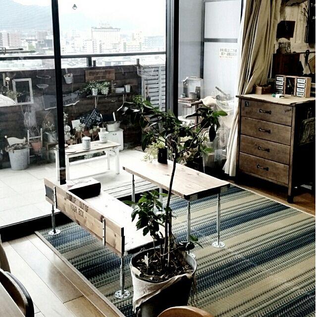 Lounge,ニトリのラグ,DIYテーブルとベンチ,RC山口♡,ステンシル♡,ベランダガーデン,ゴムの木 yuriyanaの部屋